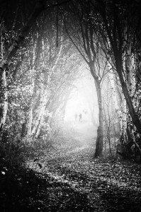 Fog Walkers in Forest